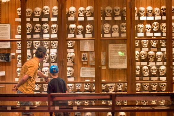 The Mütter Museum
